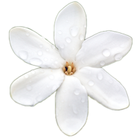 Tiare-Style-Flower
